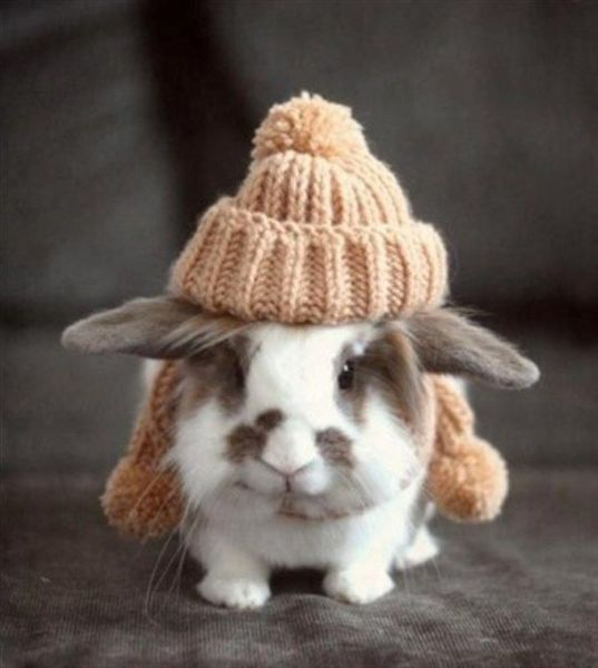 Conejo friolero