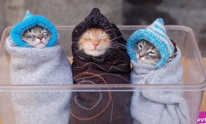 Gatetes frio