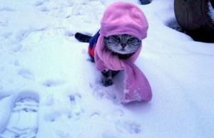 Gato bufanda frio