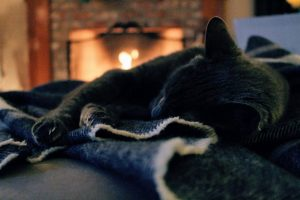 Hasta el gato le gusta el calor de la chimenea