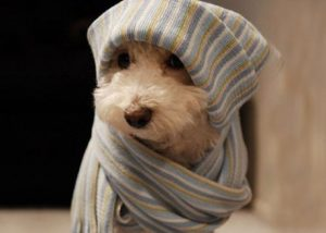 Perro con frio