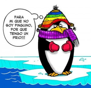 Pinguino frio